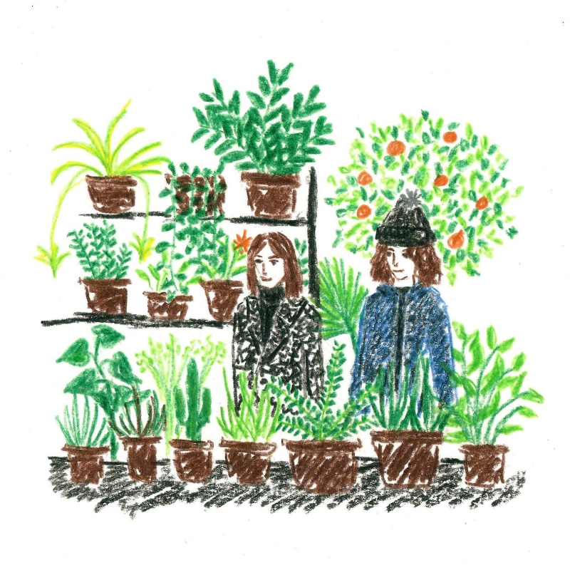Garden Centre – Daria Wallace Illustration